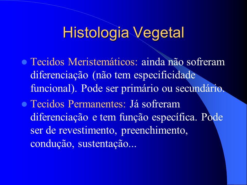 Histologia Vegetal Tecidos Meristemáticos: ainda não sofreram diferenciação (não tem especificidade funcional). Pode ser primário ou secundário.