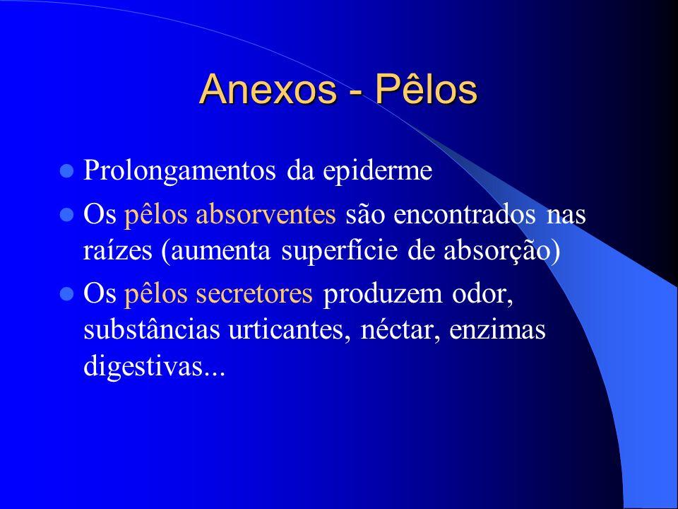 Anexos - Pêlos Prolongamentos da epiderme