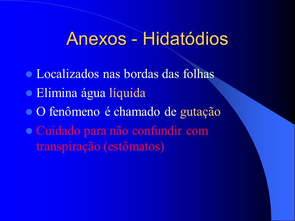 Anexos - Hidatódios Localizados nas bordas das folhas