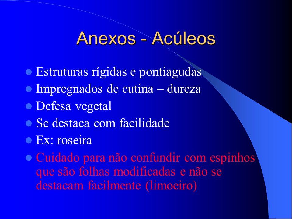 Anexos - Acúleos Estruturas rígidas e pontiagudas