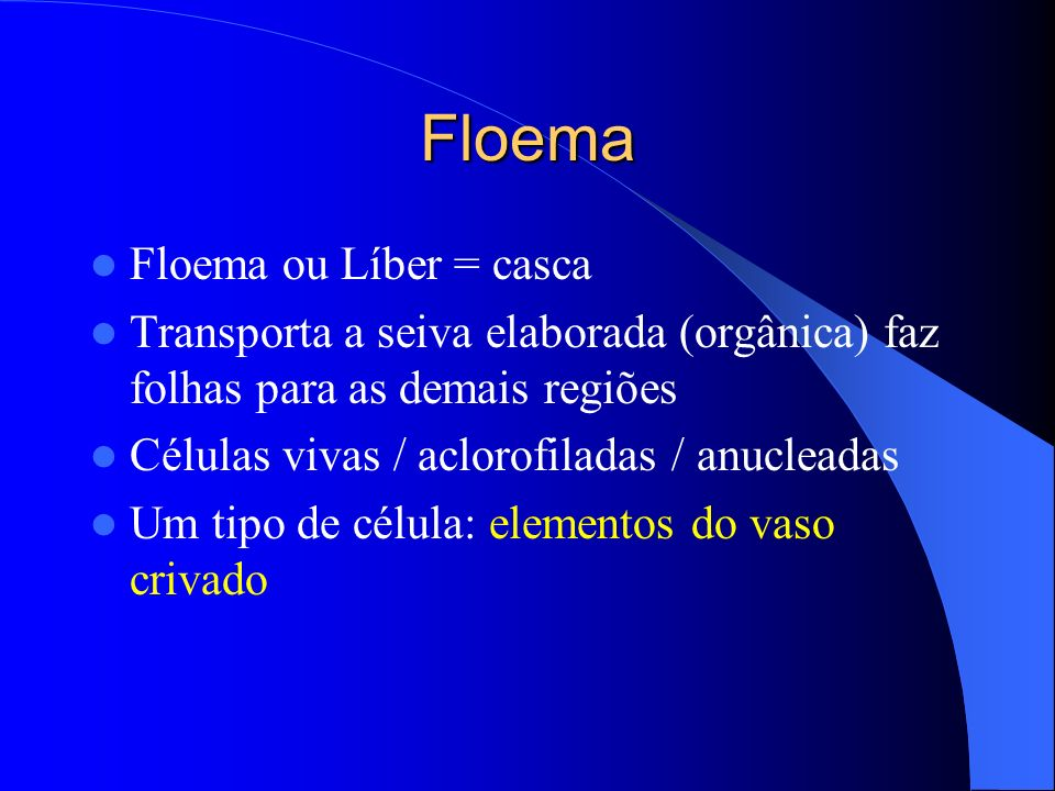 Floema Floema ou Líber = casca