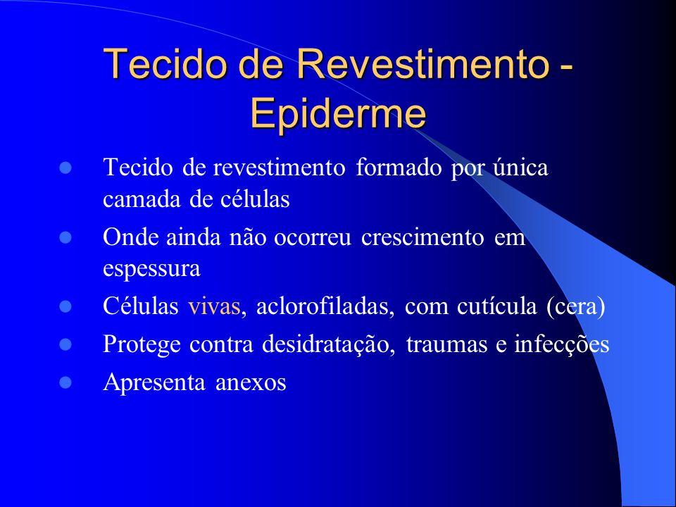 Tecido de Revestimento - Epiderme