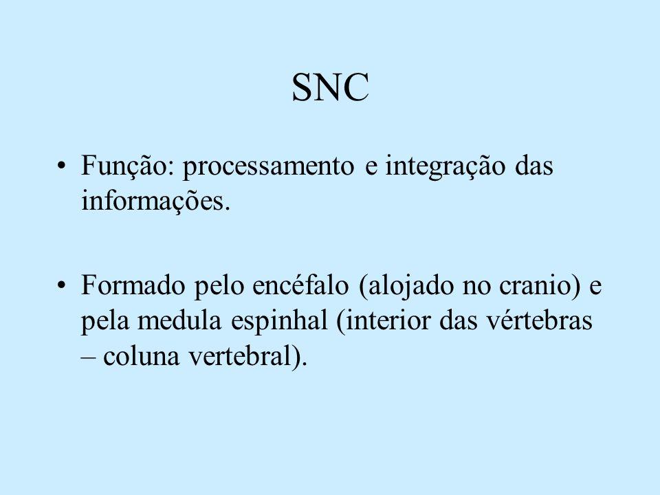 SNC Função: processamento e integração das informações.
