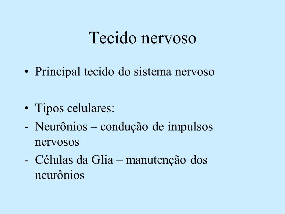 Tecido nervoso Principal tecido do sistema nervoso Tipos celulares: