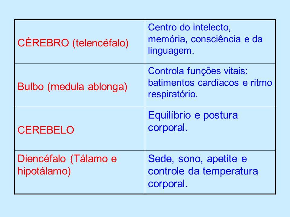 CÉREBRO (telencéfalo)