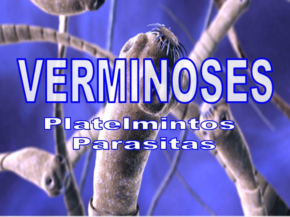 VERMINOSES Platelmintos Parasitas