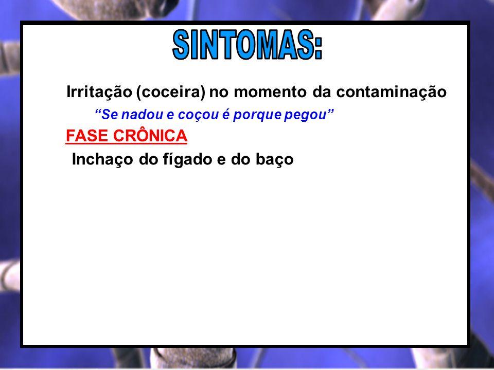 SINTOMAS: Irritação (coceira) no momento da contaminação FASE CRÔNICA