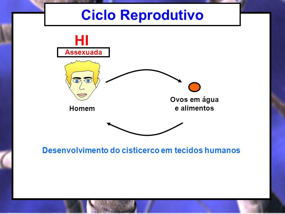 Ciclo Reprodutivo HI Desenvolvimento do cisticerco em tecidos humanos