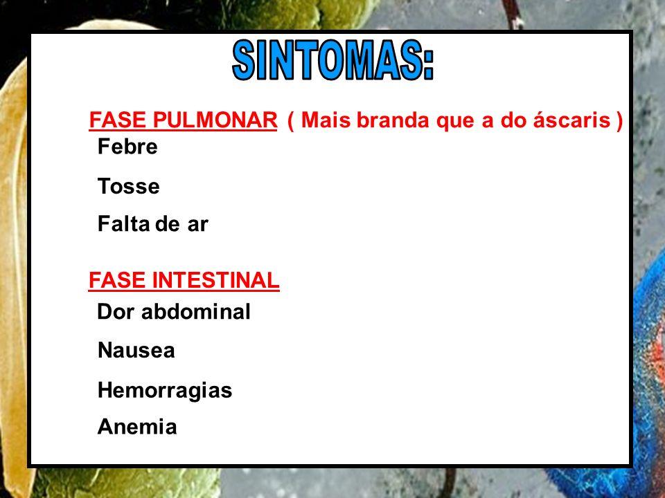 SINTOMAS: FASE PULMONAR ( Mais branda que a do áscaris ) Febre Tosse