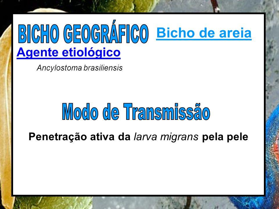 BICHO GEOGRÁFICO Bicho de areia Modo de Transmissão Agente etiológico