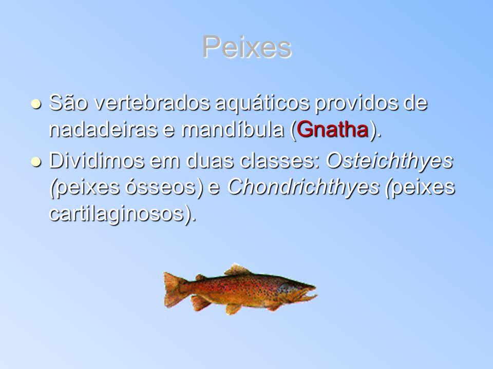 Peixes São vertebrados aquáticos providos de nadadeiras e mandíbula (Gnatha).