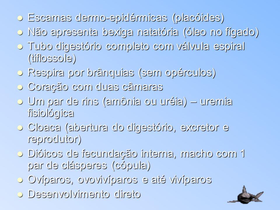 Escamas dermo-epidérmicas (placóides)