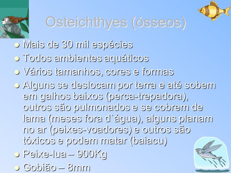 Osteichthyes (ósseos)