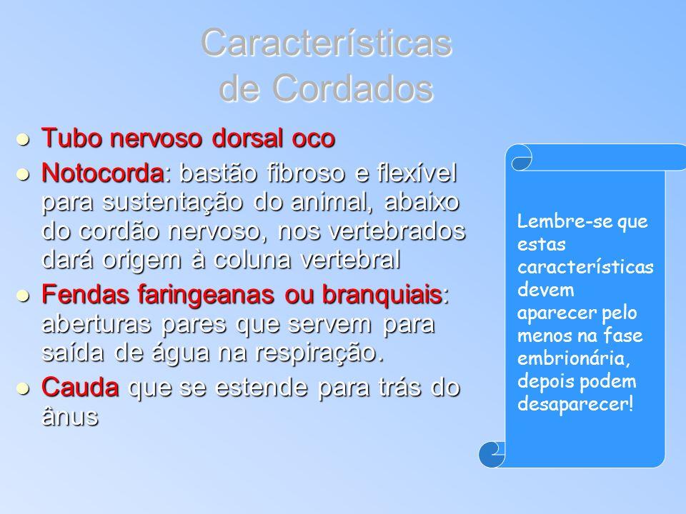 Características de Cordados