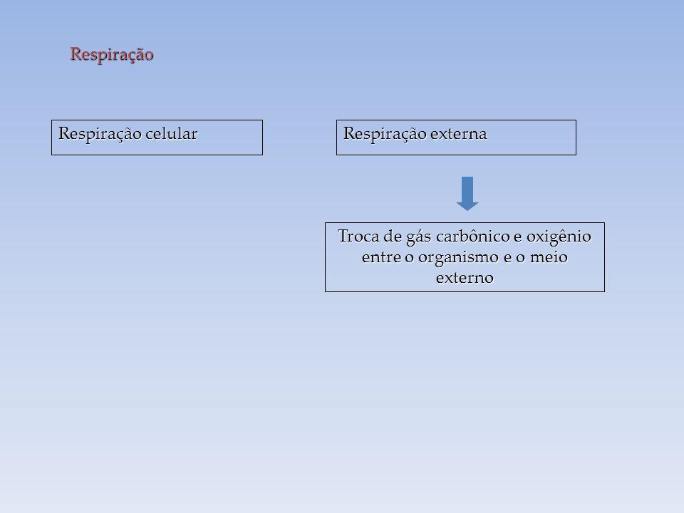 Troca de gás carbônico e oxigênio entre o organismo e o meio externo