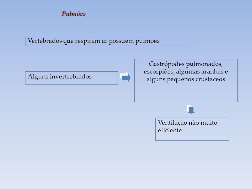 Pulmões Vertebrados que respiram ar possuem pulmões. Gastrópodes pulmonados, escorpiões, algumas aranhas e alguns pequenos crustáceos.