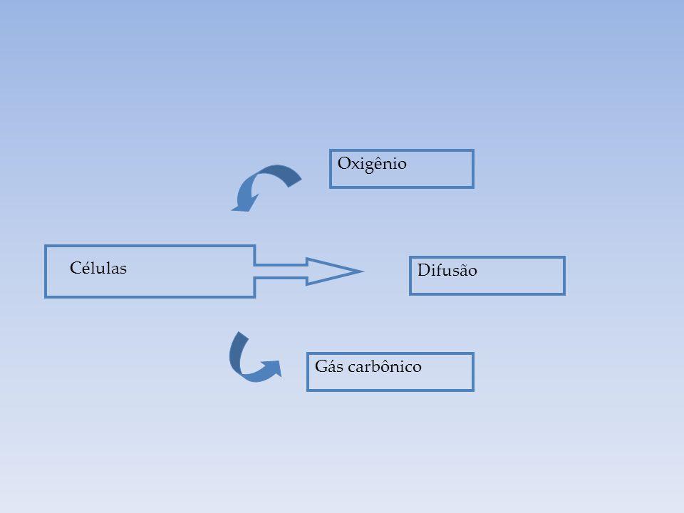 Oxigênio Células Difusão Gás carbônico