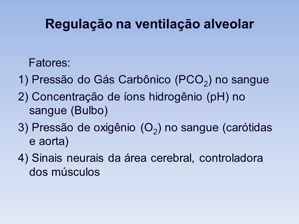 Regulação na ventilação alveolar