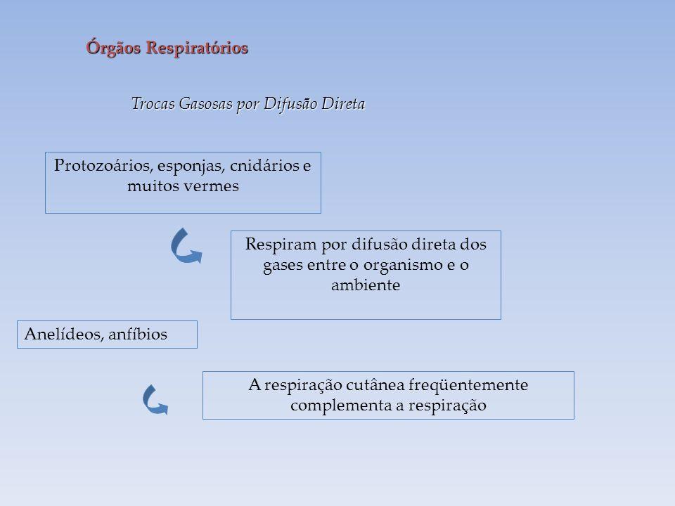 Trocas Gasosas por Difusão Direta