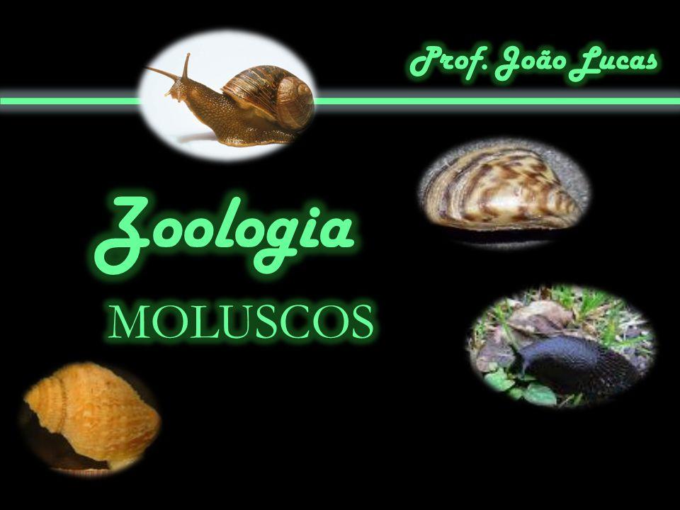 Prof. João Lucas Zoologia MOLUSCOS