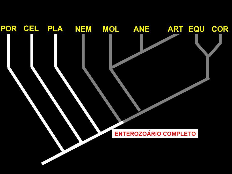 POR CEL PLA NEM MOL ANE ART EQU COR ENTEROZOÁRIO COMPLETO