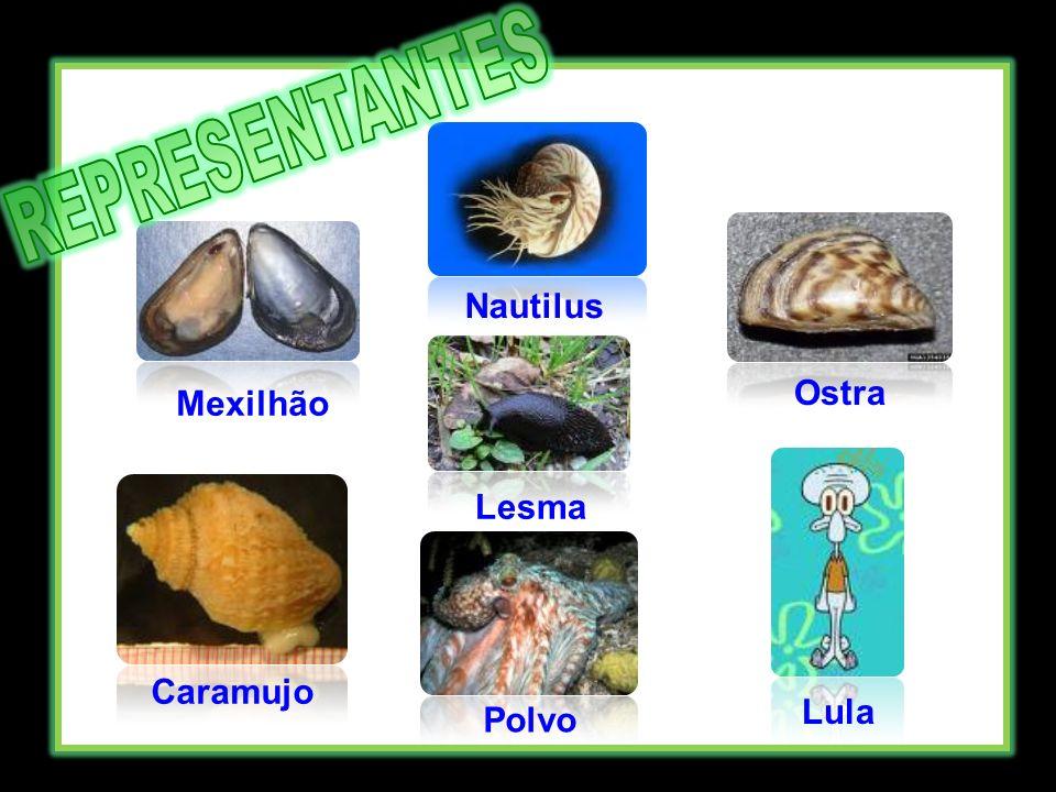 REPRESENTANTES Nautilus Ostra Mexilhão Lesma Caramujo Lula Polvo