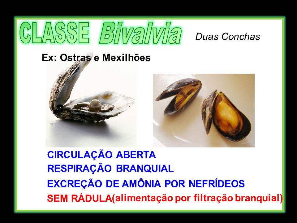 EXCREÇÃO DE AMÔNIA POR NEFRÍDEOS (alimentação por filtração branquial)