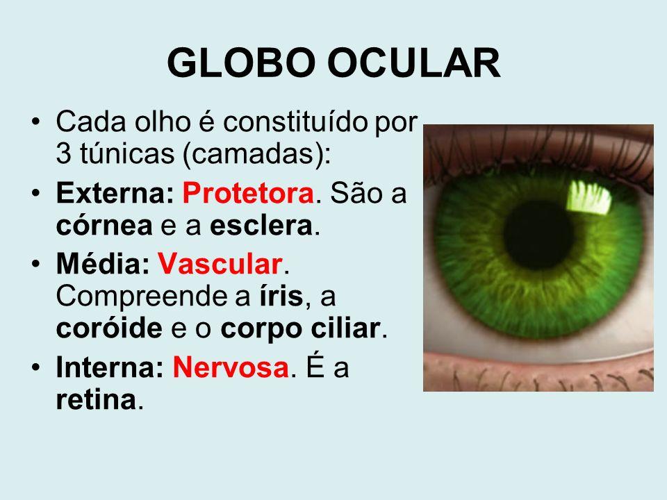 GLOBO OCULAR Cada olho é constituído por 3 túnicas (camadas):