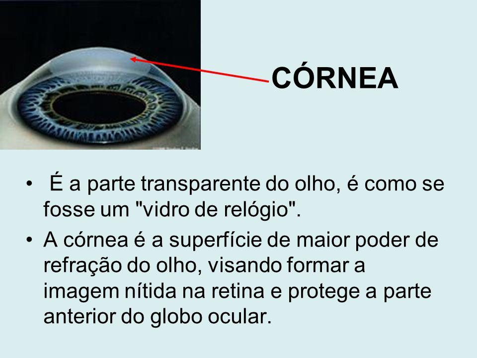 CÓRNEA É a parte transparente do olho, é como se fosse um vidro de relógio .