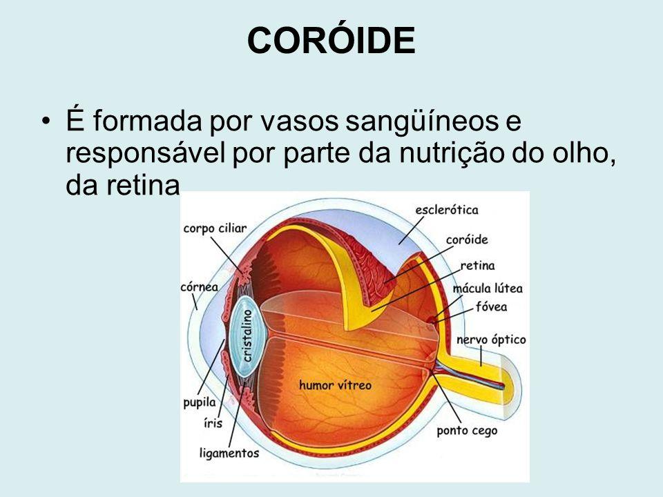 CORÓIDE É formada por vasos sangüíneos e responsável por parte da nutrição do olho, da retina.