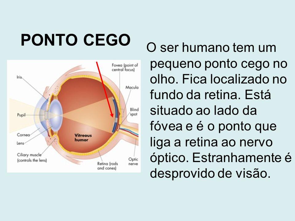 O ser humano tem um pequeno ponto cego no olho