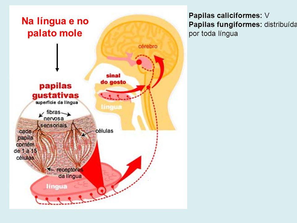 Na língua e no palato mole