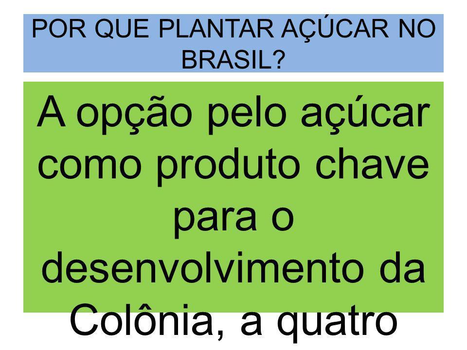 POR QUE PLANTAR AÇÚCAR NO BRASIL