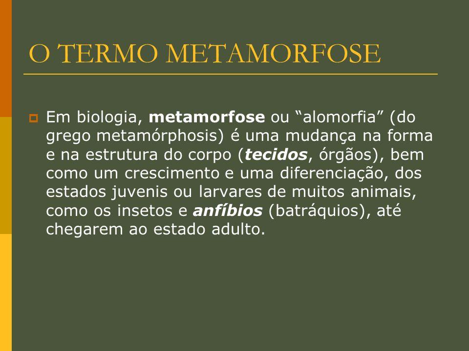 O TERMO METAMORFOSE