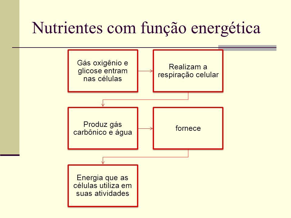 Nutrientes com função energética