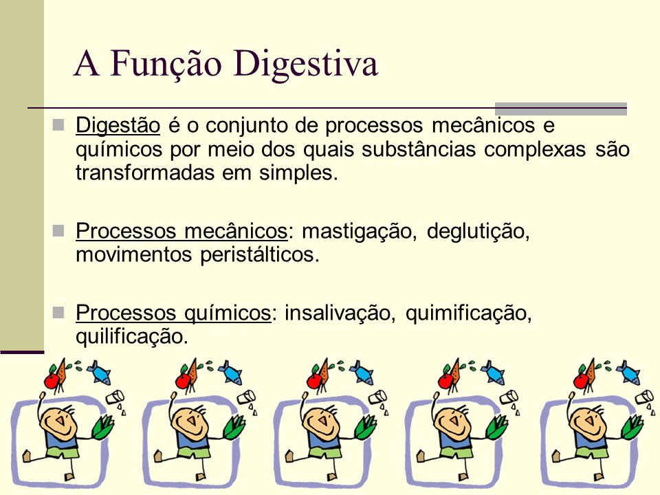 A Função Digestiva Digestão é o conjunto de processos mecânicos e químicos por meio dos quais substâncias complexas são transformadas em simples.