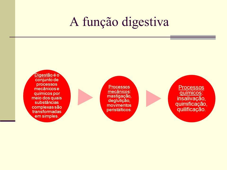 A função digestivaDigestão é o conjunto de processos mecânicos e químicos por meio dos quais substâncias complexas são transformadas em simples.