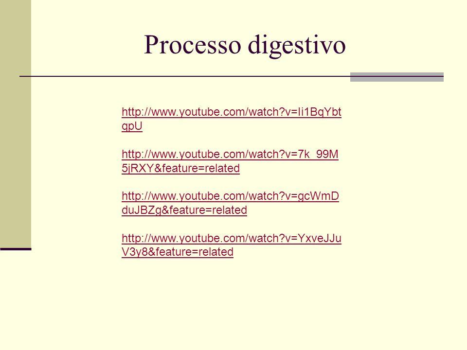 Processo digestivo http://www.youtube.com/watch v=Ii1BqYbtqpU