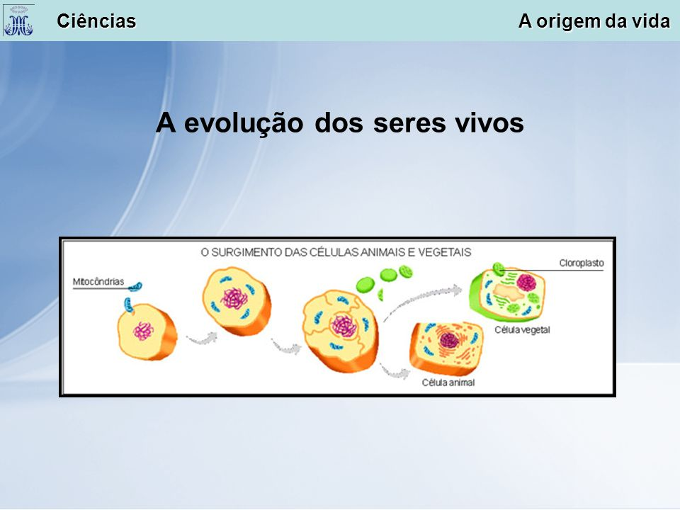 A evolução dos seres vivos