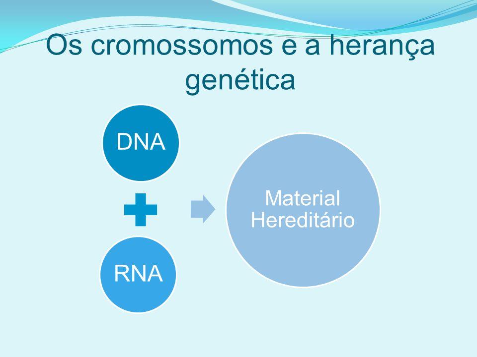 Os cromossomos e a herança genética
