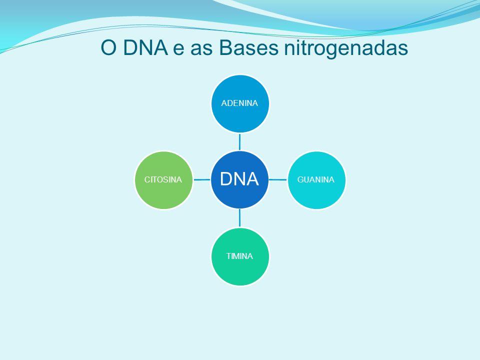 O DNA e as Bases nitrogenadas