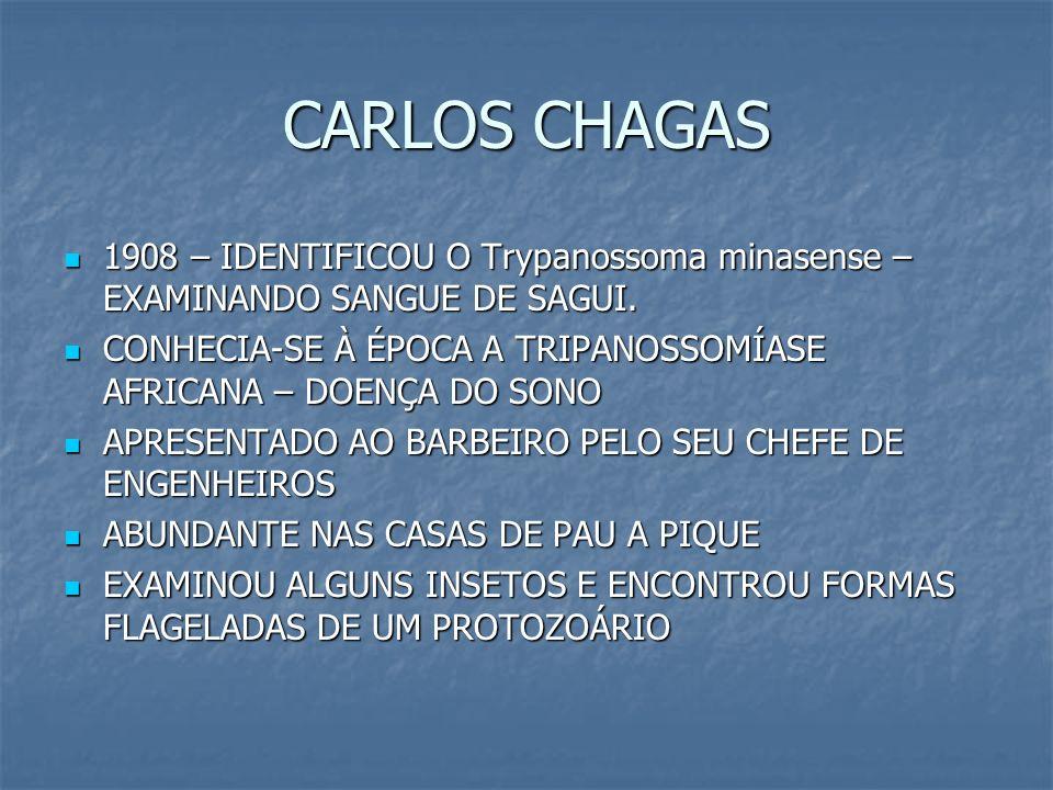 CARLOS CHAGAS 1908 – IDENTIFICOU O Trypanossoma minasense – EXAMINANDO SANGUE DE SAGUI.