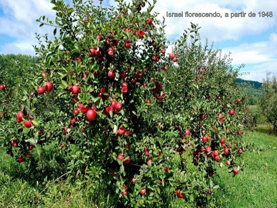 Israel florescendo, a partir de 1948