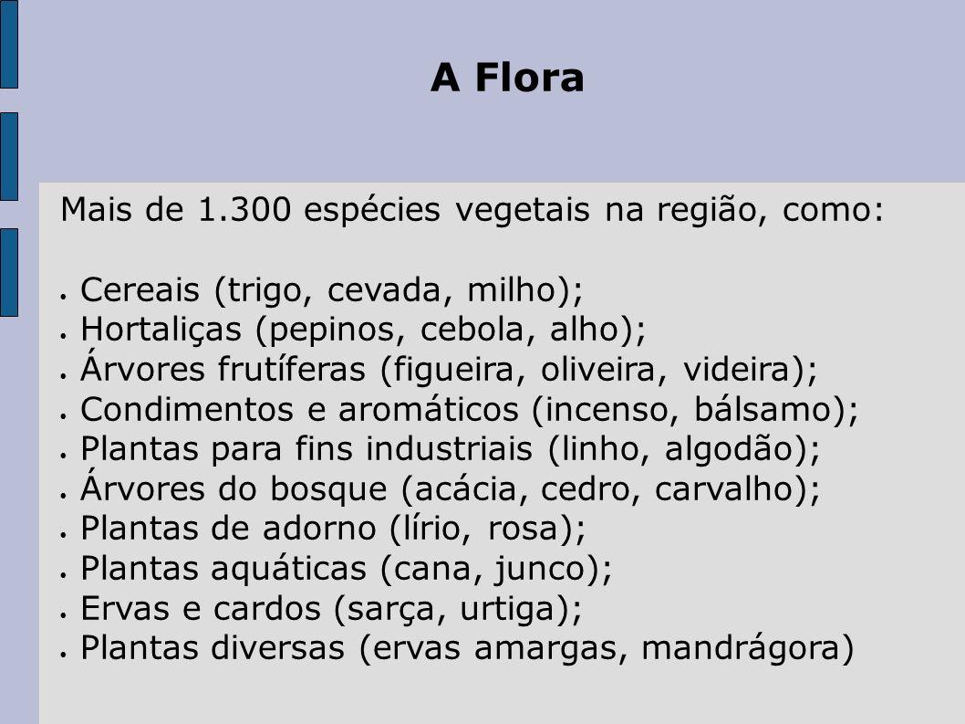 A Flora Mais de 1.300 espécies vegetais na região, como: