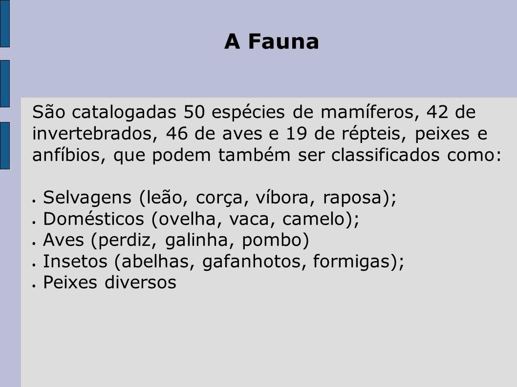 A Fauna