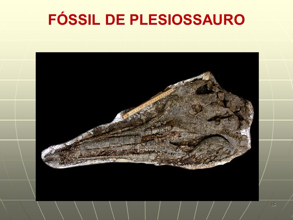 FÓSSIL DE PLESIOSSAURO