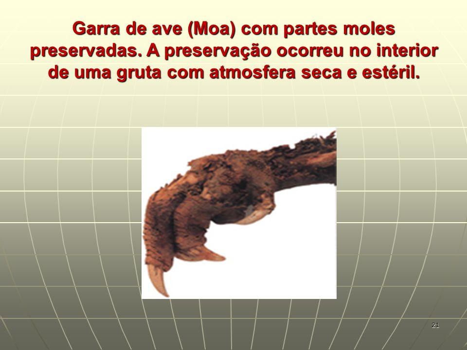 Garra de ave (Moa) com partes moles preservadas
