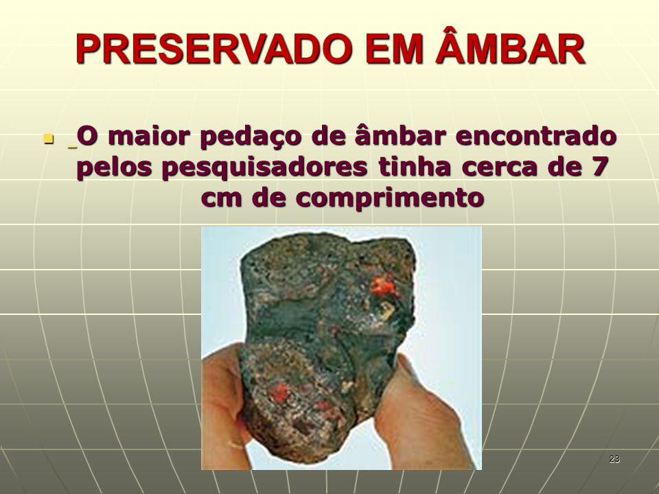 PRESERVADO EM ÂMBAR O maior pedaço de âmbar encontrado pelos pesquisadores tinha cerca de 7 cm de comprimento.