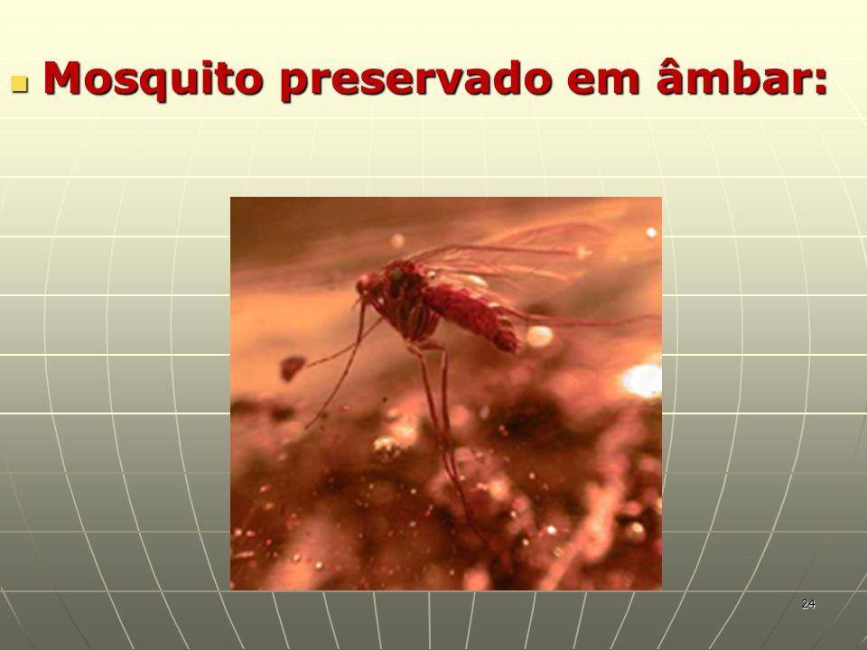 Mosquito preservado em âmbar: