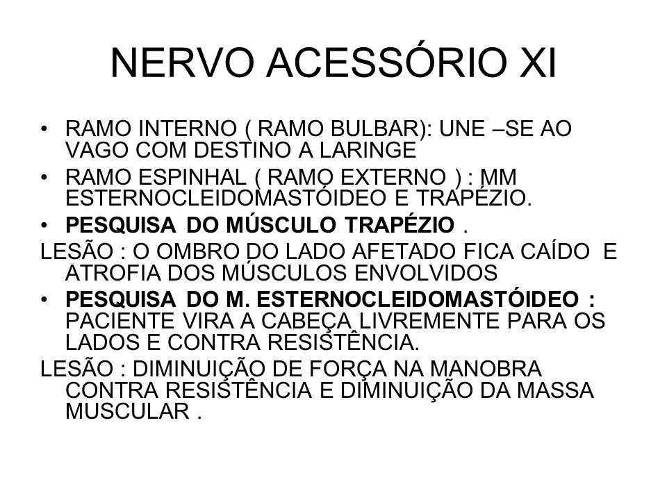 NERVO ACESSÓRIO XI RAMO INTERNO ( RAMO BULBAR): UNE –SE AO VAGO COM DESTINO A LARINGE.
